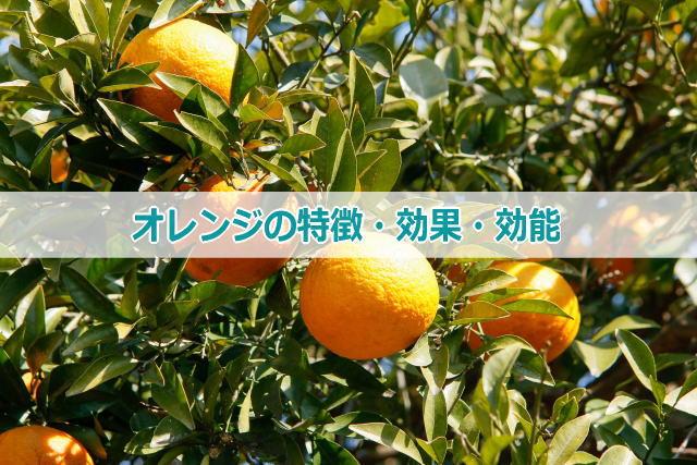 オレンジの特徴・効果・効能