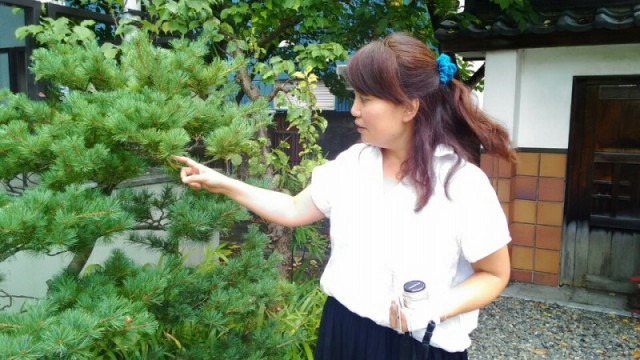 松の枝葉をリンパに見立てて