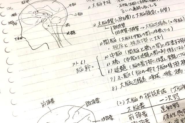 インストラクター養成講座の解剖生理学のノート