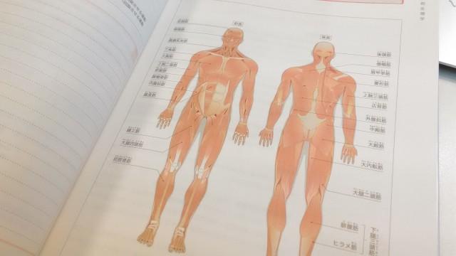 アロマセラピスト 公式テキスト 筋系