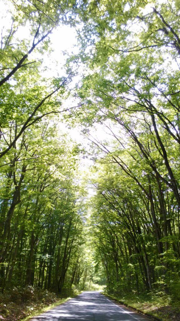福島県昭和村の森の中